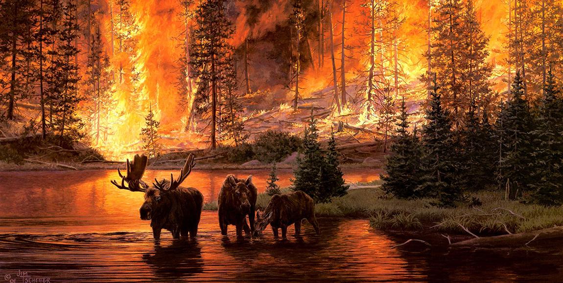 пажар лес огонь