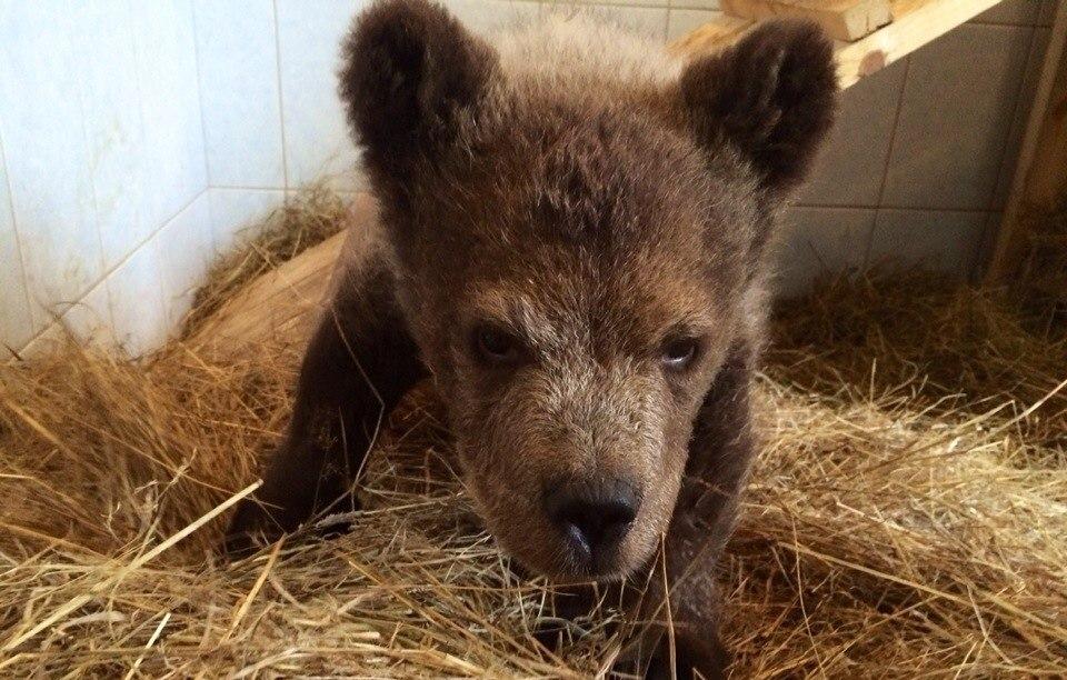 медведи 1