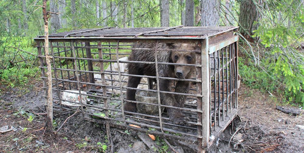 притравочная станция медведь