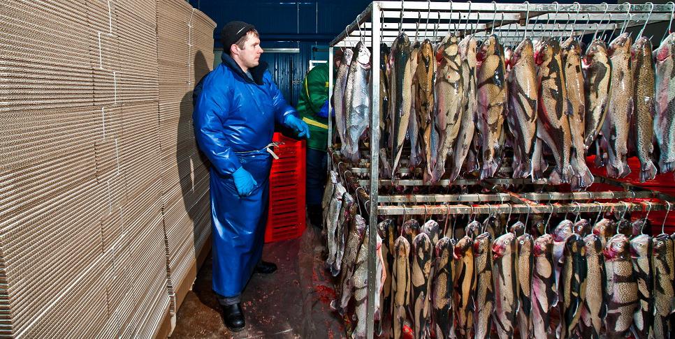 форель кала я марья рыба forelevod.ru