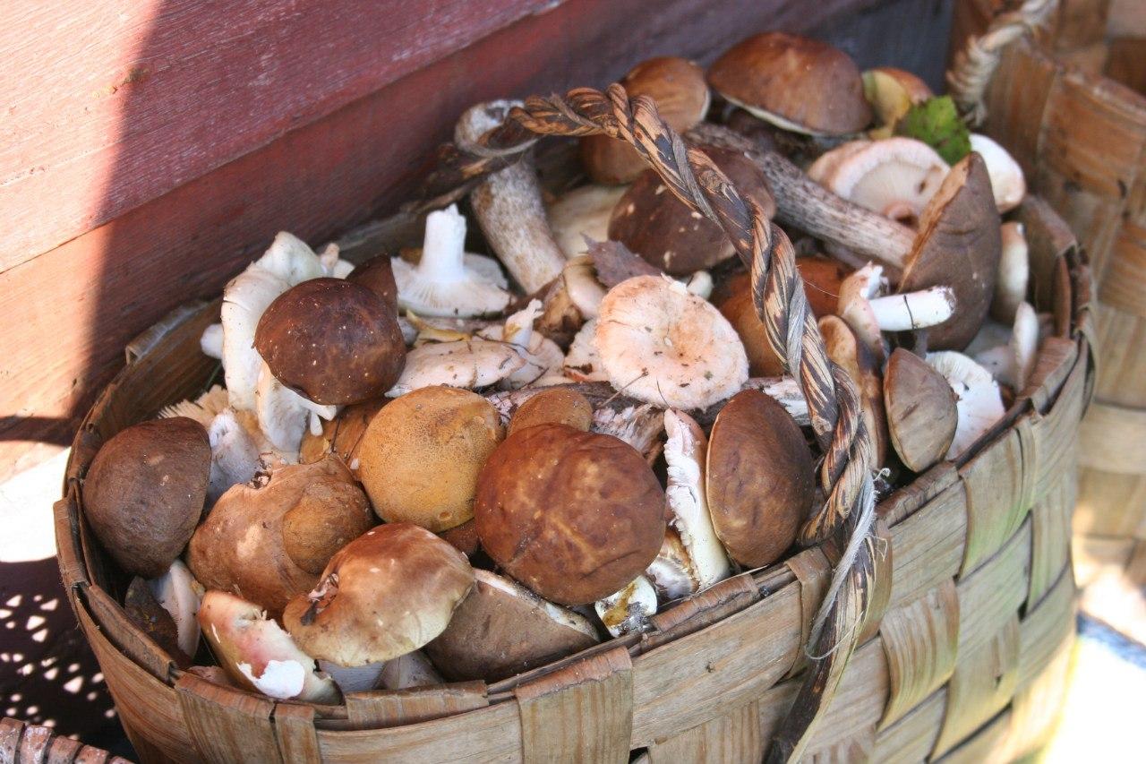 грибы свои