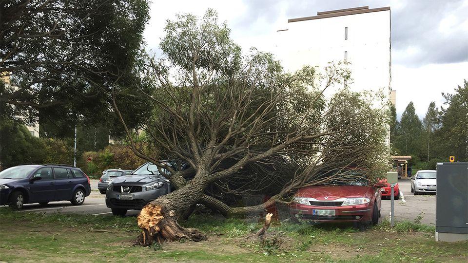 ветер дерево Юле