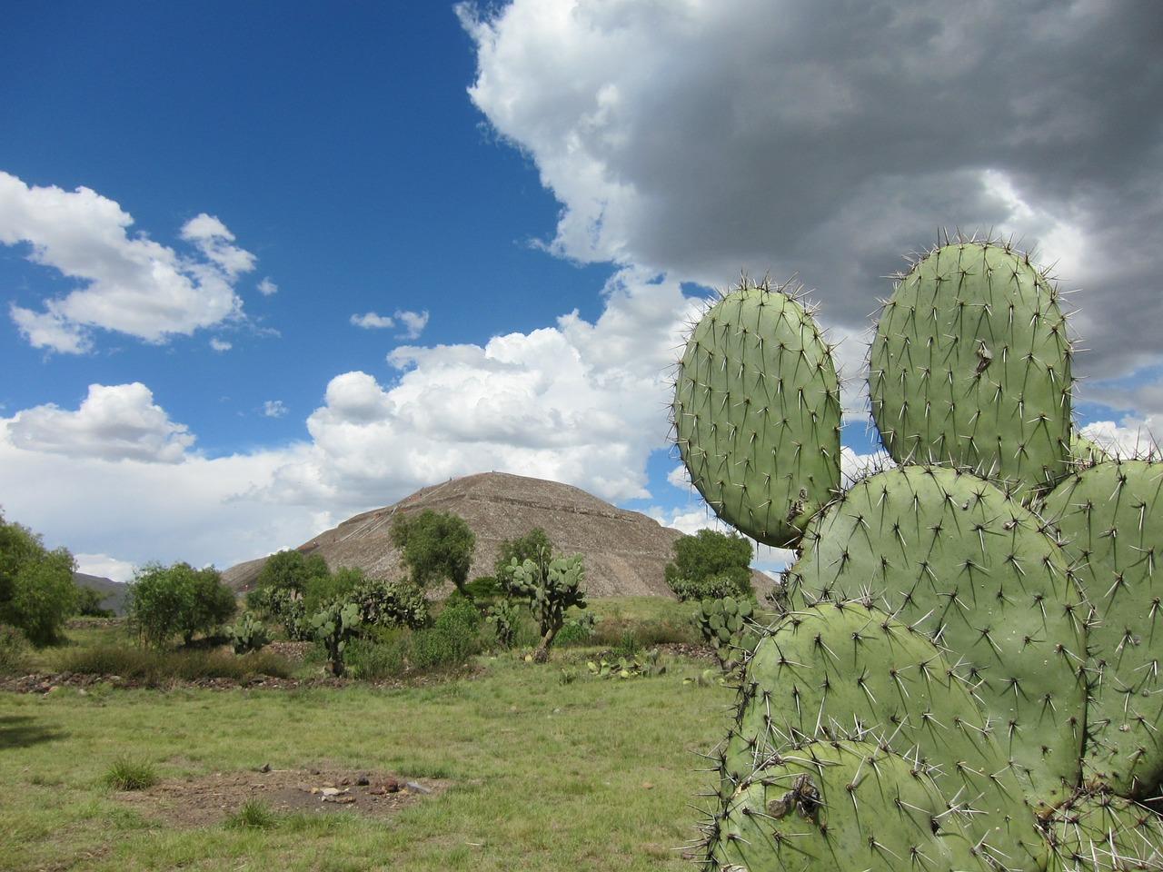 Мексика кактус Пиксбэй