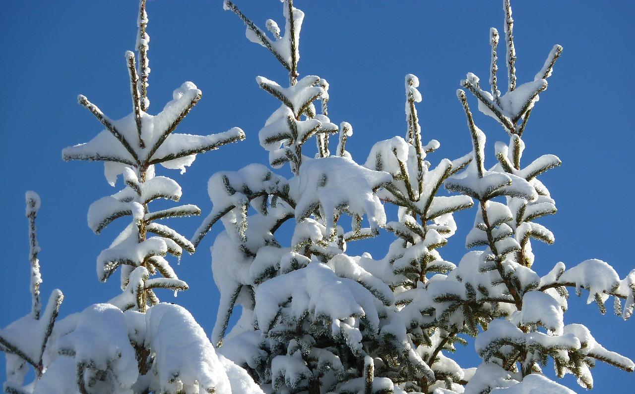елка зима пиксабай