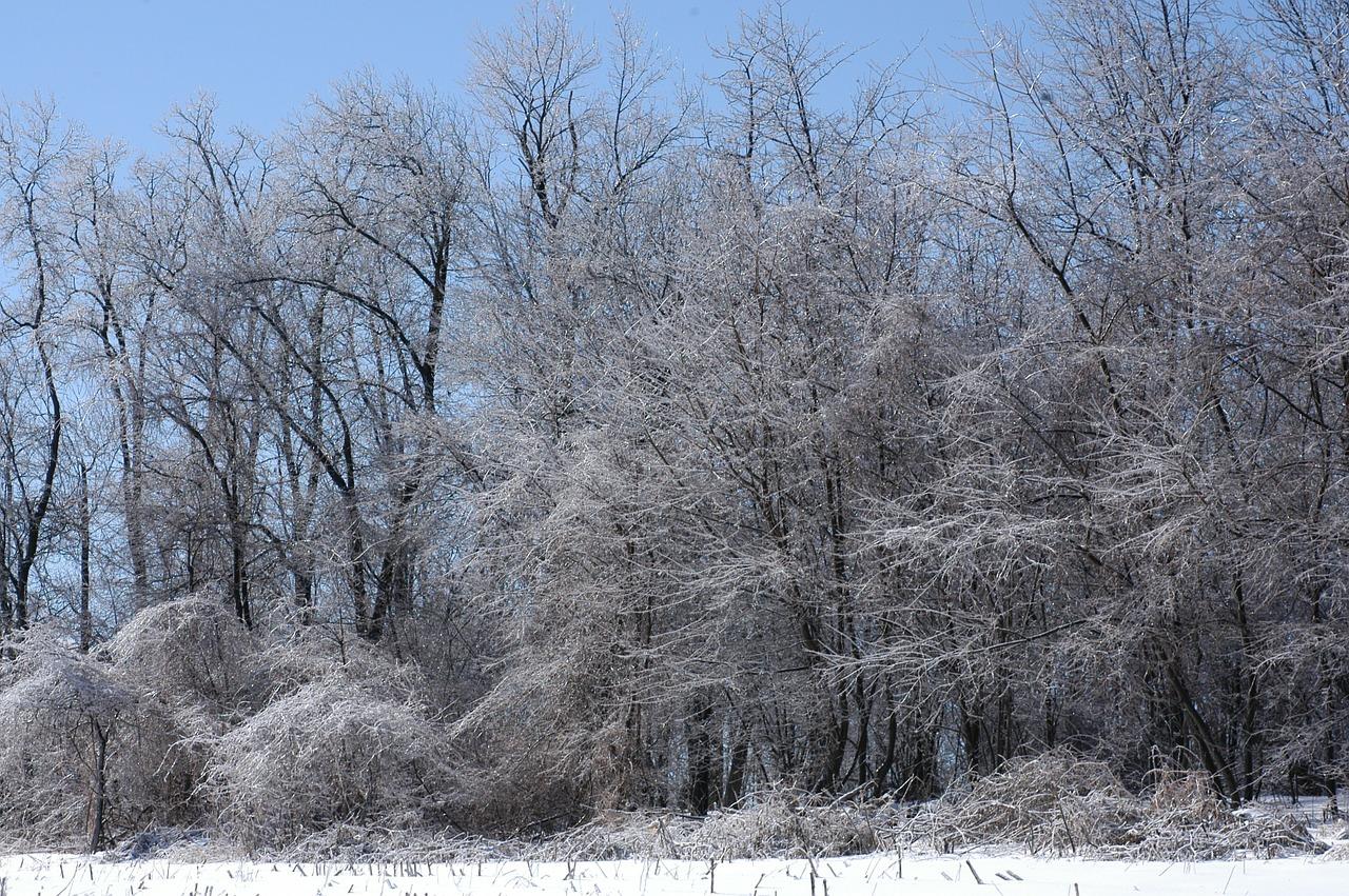 снег буря ураган ветер пиксабай