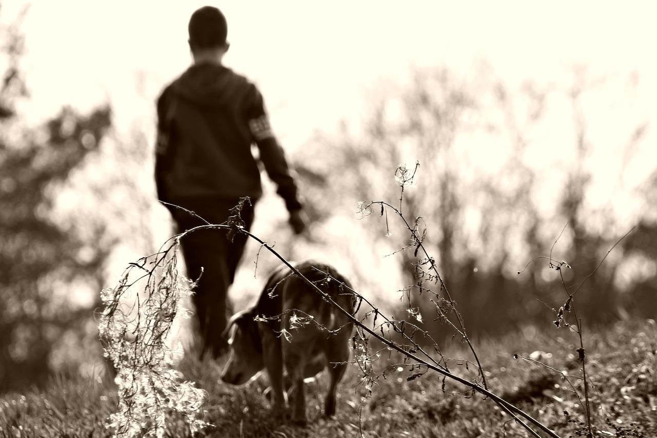 собака 2 гулять пиксабай