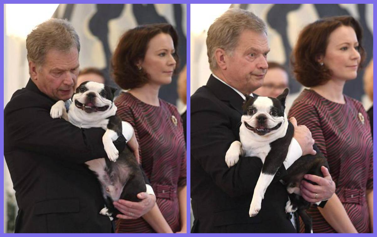 президент Финляндии собака