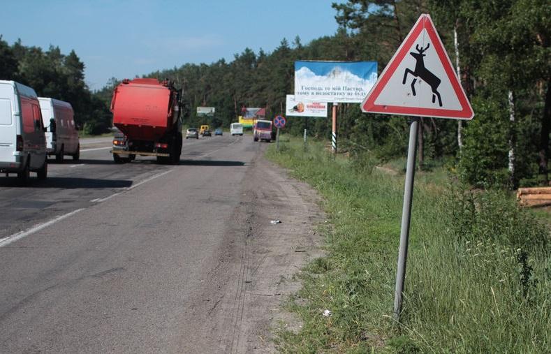 знак дикие животные дорога