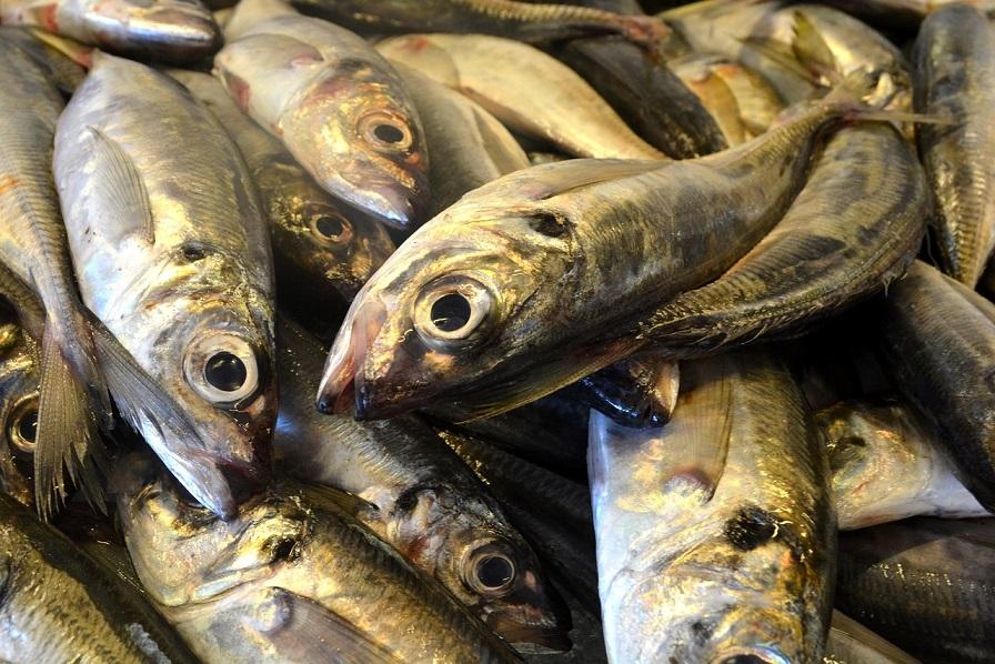 fish-1786792_1280