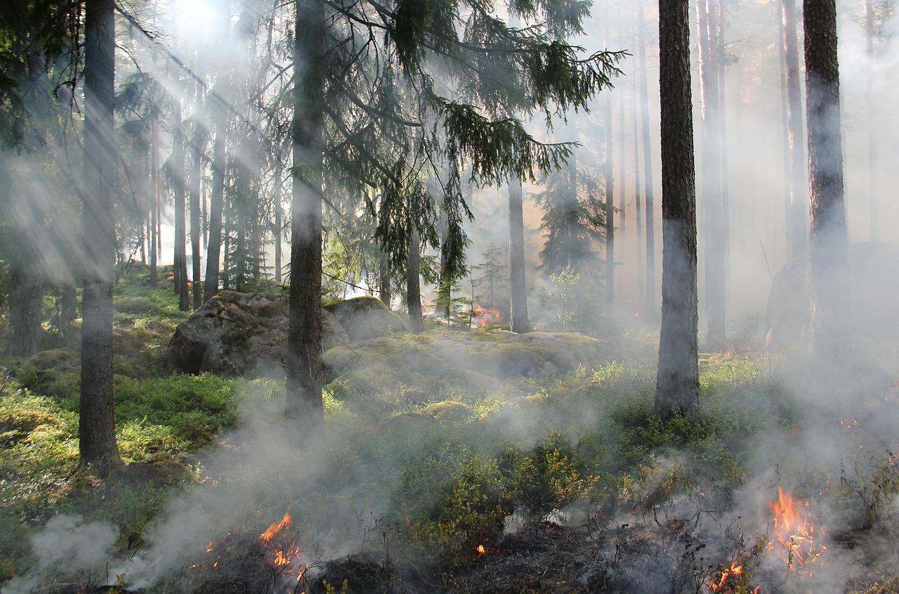 лес пожар piksabaj