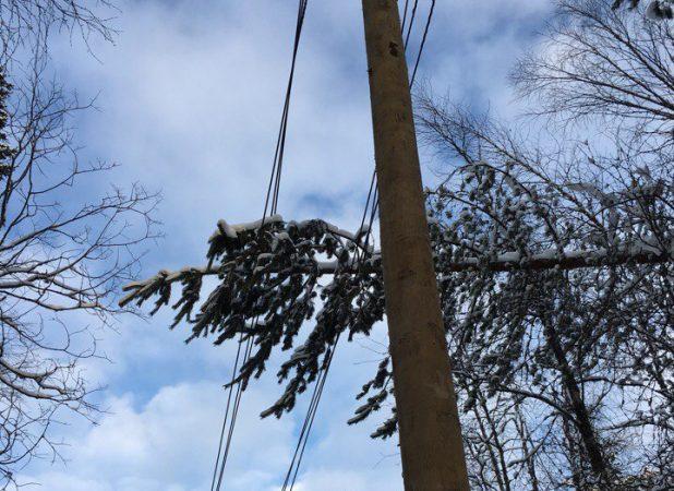 дерево на проводах