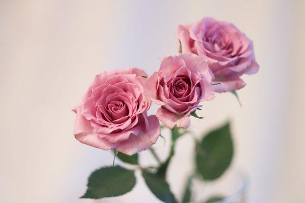 flower-3195305_1280