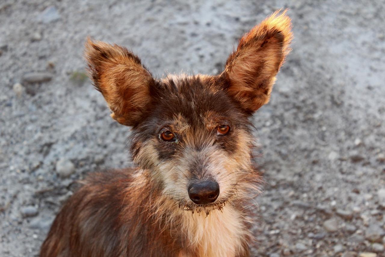 дворняга собака Пиксабей