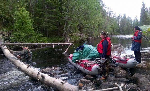 На границе национального парка «Калевальский» туристы столкнулись с упавшим деревом