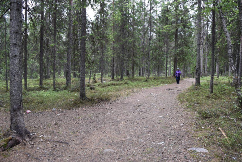 Прогулки людей по лесу