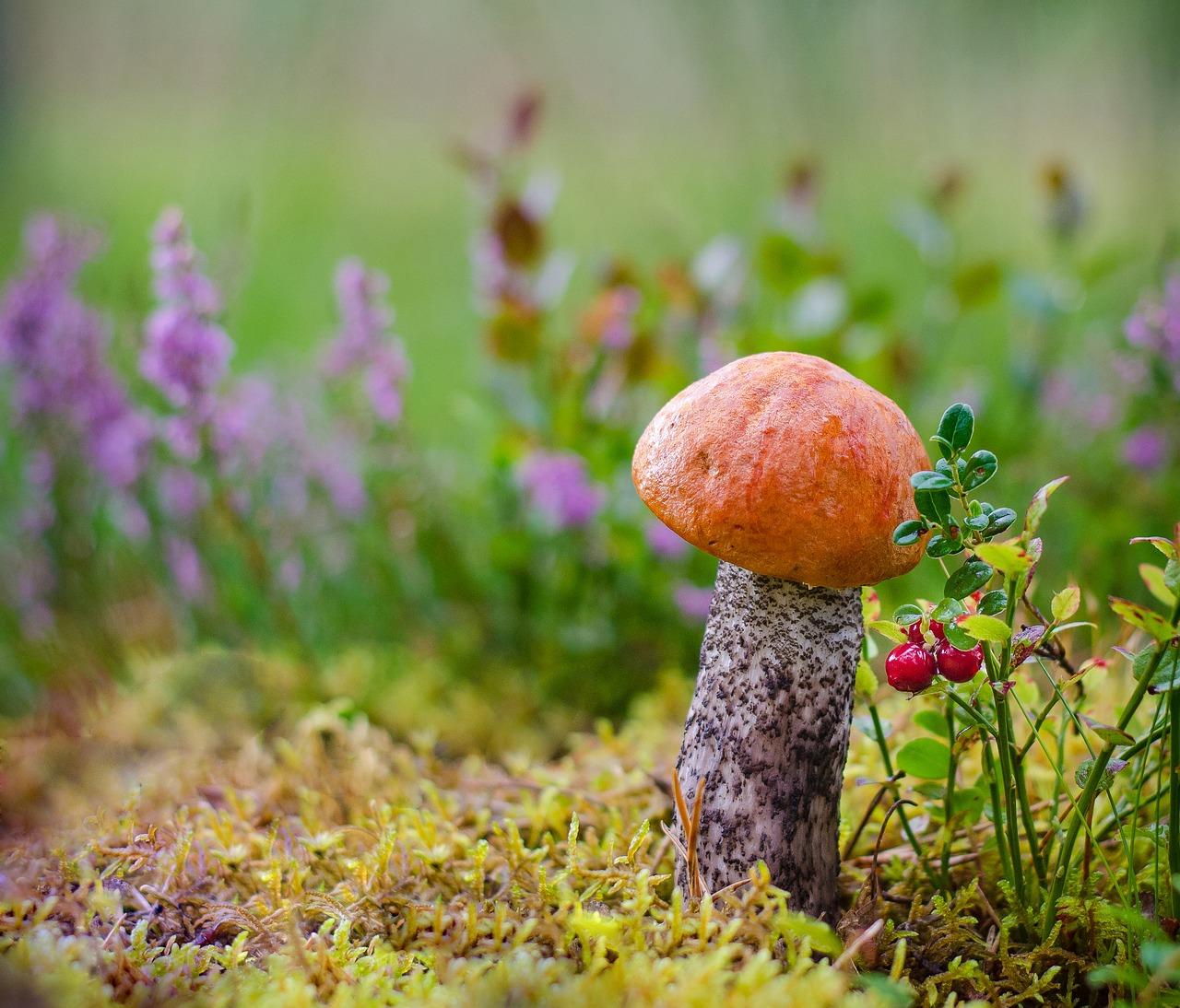 грибы пиксабей