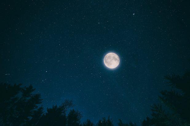 лес ночь пиксабей