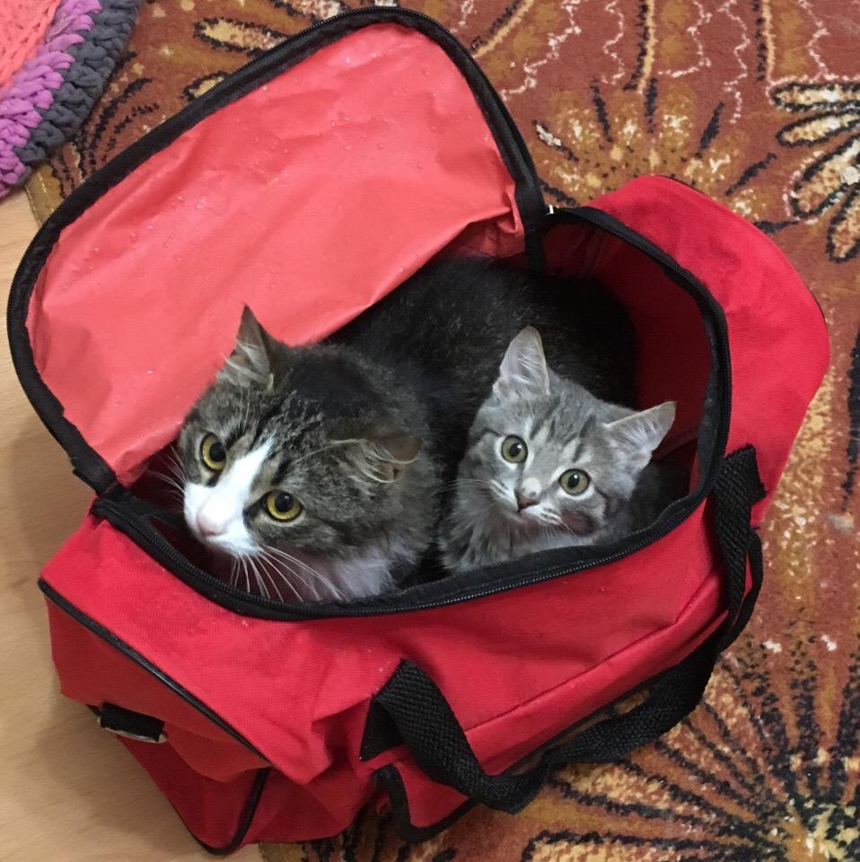 кошки Мура и Симка