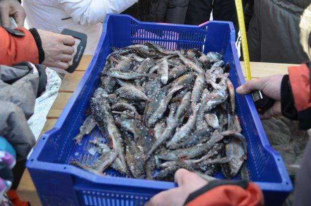 куйтин кала рыба