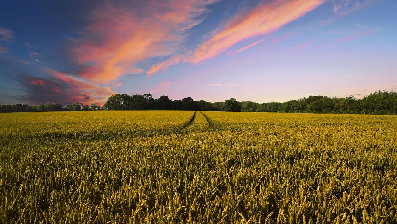 поле Пиксабей