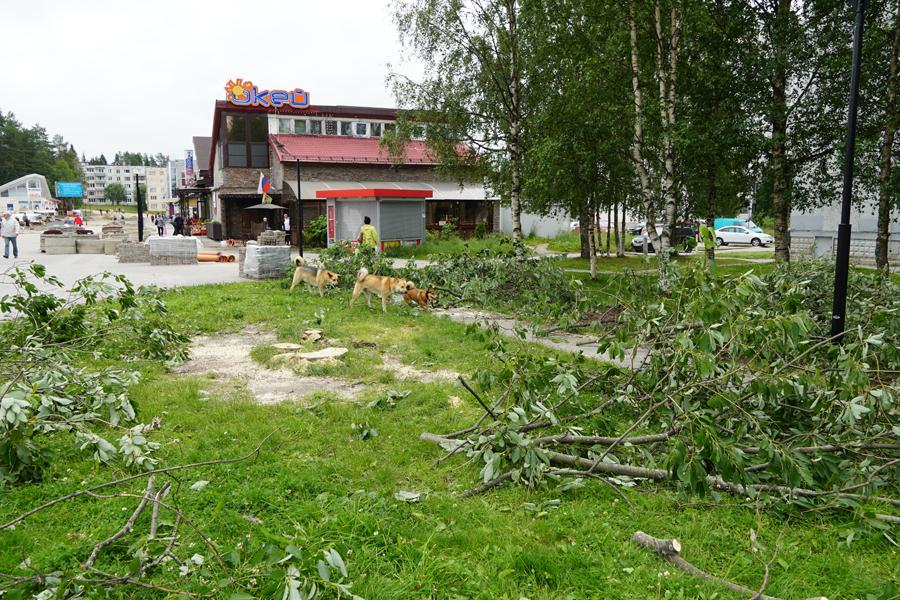 бульвар Лазарева вырубка деревьев