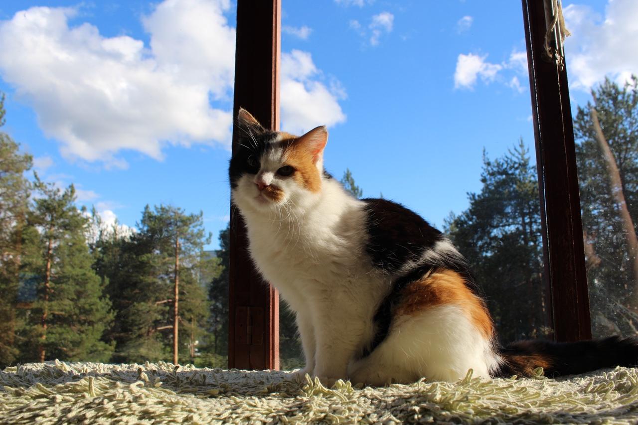 кошка Оливия Добрые руки