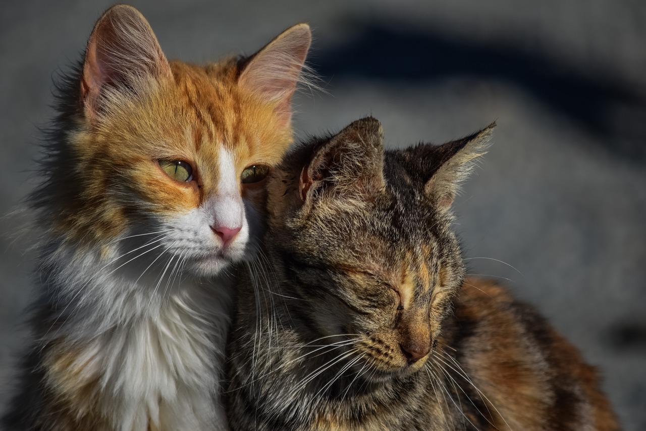 кошки пиксабей