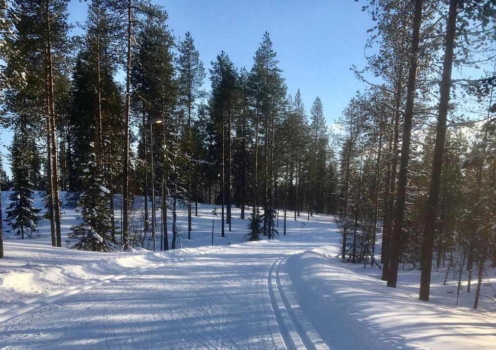 зима лыжня