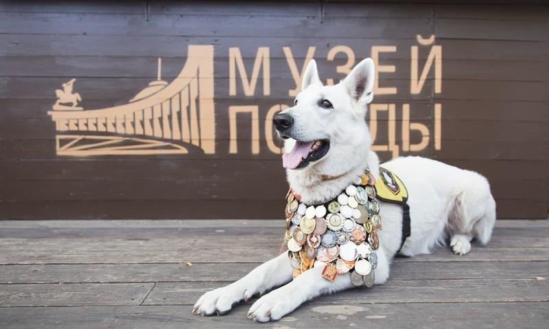 музей победы собака
