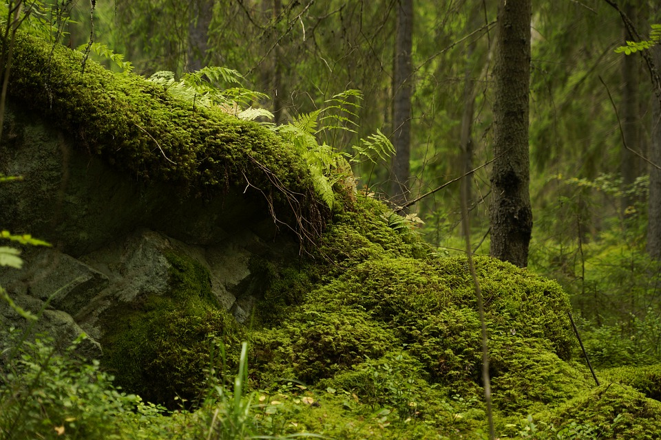 forest-4756502_960_720